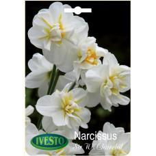 3063 Нарцис Sir Winston Churchil 3 бр.