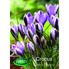 3112 Минзухар Spring beauty 6 бр.